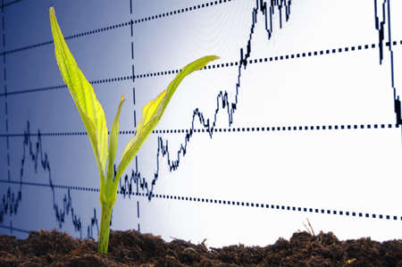 finance or business growth concept with young plant Stock Photo - 7522270