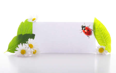 empty sheet of paper and green leaf for note photo