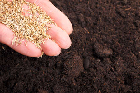 sowing hand and soil showing growth or agriculture concept Stock Photo - 7534410