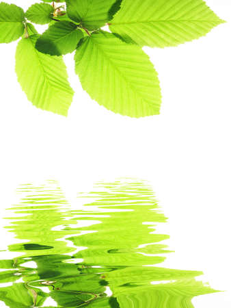 green leave and water surface with copyspace