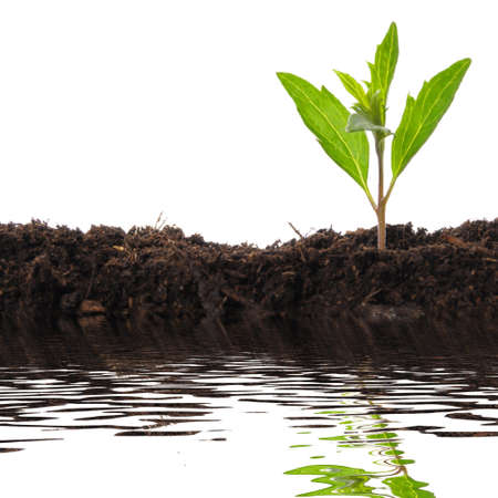 crecimiento planta: concepto de crecimiento con peque�a reflexi�n de la planta y el agua