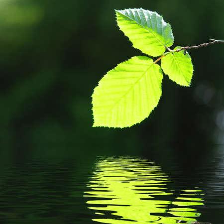 licencia verde y la superficie del agua con copyspace  Foto de archivo