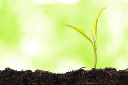 growth concept with growing young plant in nature  Stock Photo - 7634400
