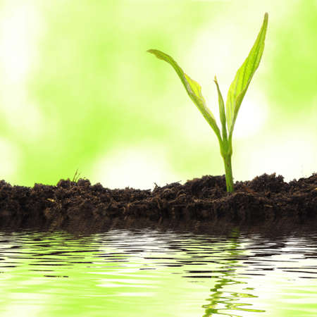 plant growing: growth concept with small plant and water reflection