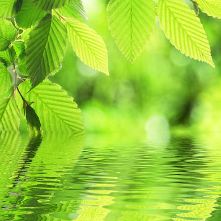 green leave and water surface with copyspace photo