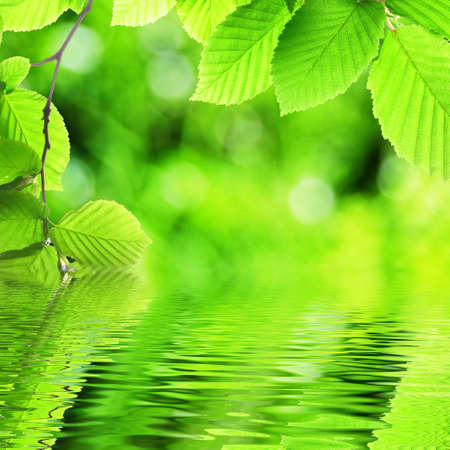 concepto de primavera o la ecología de verano con hojas verdes y agua