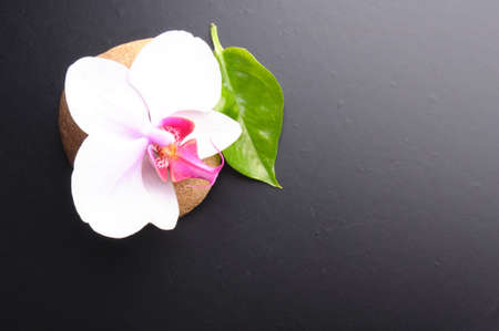 massage still life with zen stones leaf and black copyspace photo