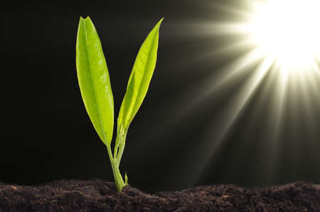 small plant and soil on blue background with sun and copyspace photo