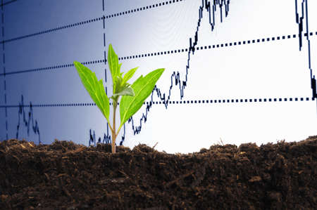 finance or business growth concept with young plant Stock Photo - 7699322