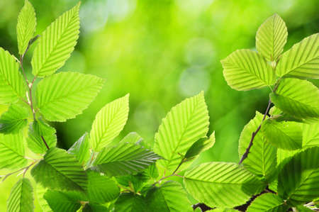 summer or spring nature concept with green leaves and bokeh Stock Photo - 7711204