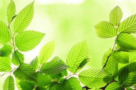 verano verde hojas con copyspace mostrando el concepto de naturaleza  Foto de archivo - 7711198