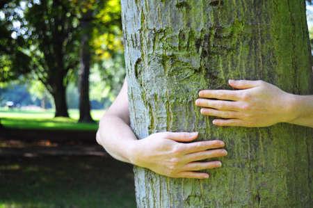 sustentabilidad: abrazando un �rbol con las manos shwing naturaleza ecoecology o concepto de medio ambiente  Foto de archivo