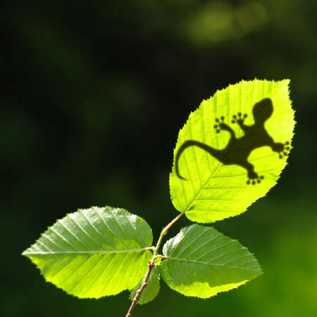 green jungle leaf with gecko shadow showing rainforest or nature concept