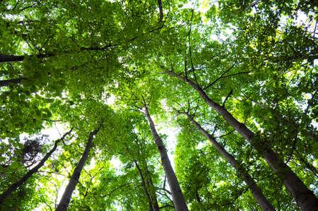 arbres été vert dans le bois ou la forêt