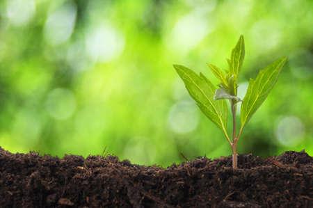 soil: giovane pianta mostrando ecologia crescita o natura concetto con copyspace