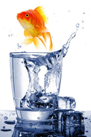 fishtank: goldfish in water glass fishtank isolated on white background