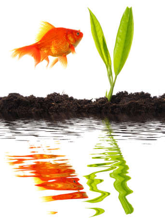 goldfish and young plant showing growth or nature concept photo