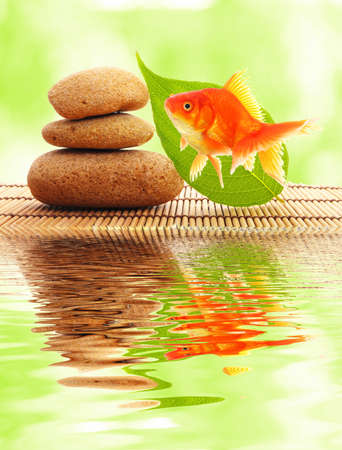 fish spa: zen or spa concept with stones goldfish and water reflection