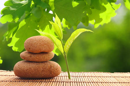 spa still life with zen stone and green leaf Фото со стока