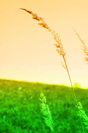 meadow in vibrant abstract colors showing summer or evening concept photo