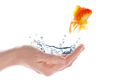 goldfish jumping from hand isolated on white background Stock Photo - 7794915