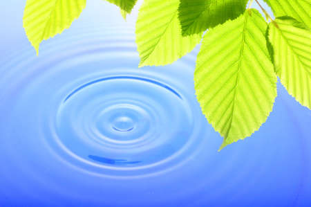 green leaf and water drop showing spa zen or wellness concept Stock Photo - 7795119