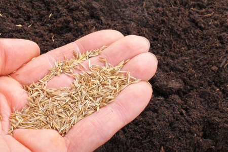 hand sowing seed on soil showing growth concept Stock Photo - 7795059