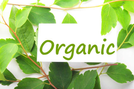 organic concept: organic concept with word on nature still life Stock Photo