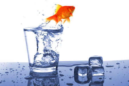 goldfish in drink glass showing jail prison free or freedom concept Stock Photo - 7820811