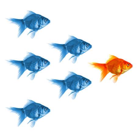 złota rybka: ZÅ'ota Rybka pokazywanie lider indywidualność sukces lub motywacji koncepcji