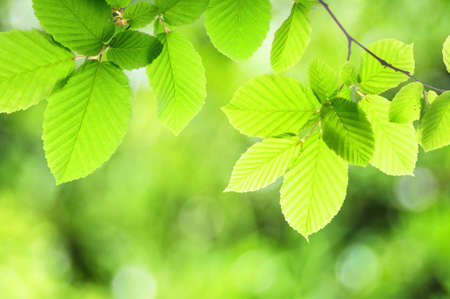 summer or spring nature concept with green leaves and bokeh Stock Photo - 7820844