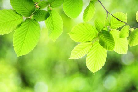 backlit: zomer of voorjaar aard concept met groene bladeren en bokeh  Stockfoto