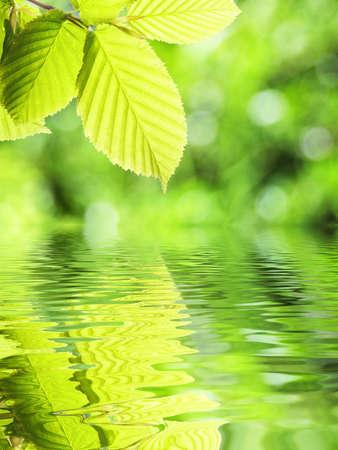 concepto de primavera o la ecolog�a de verano con hojas verdes y agua Foto de archivo - 7820854