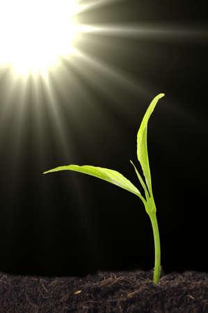 pequeña planta y el suelo sobre fondo azul con sol y copyspace  Foto de archivo