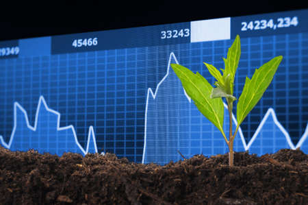 finance or business growth concept with young plant