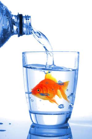 goldfish in water glass fishtank isolated on white background Stock Photo - 7880640