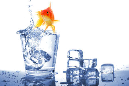 goldfish in drink glass showing jail prison free or freedom concept Stock Photo - 7880683