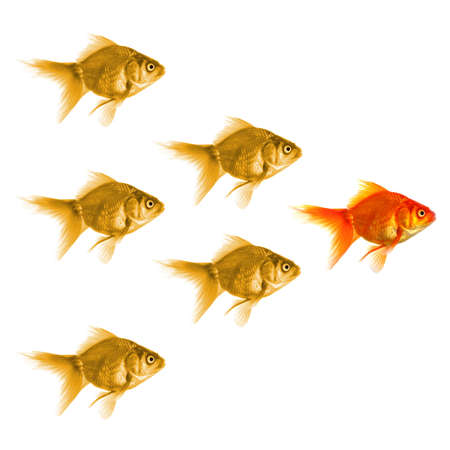 goldfish showing leader individuality success or motivation concept Stock Photo - 7880690