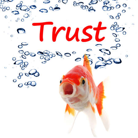 depend: trust word and goldfish showing assurance confidence or protection concept Stock Photo