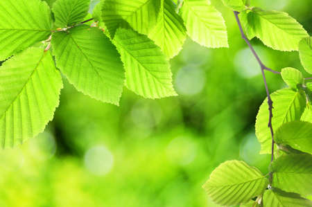 green summer or spring leaf with empty copyspace Stock Photo