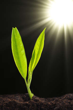 growth or new life concept with small plant sun and copyspace Stock Photo - 7932287
