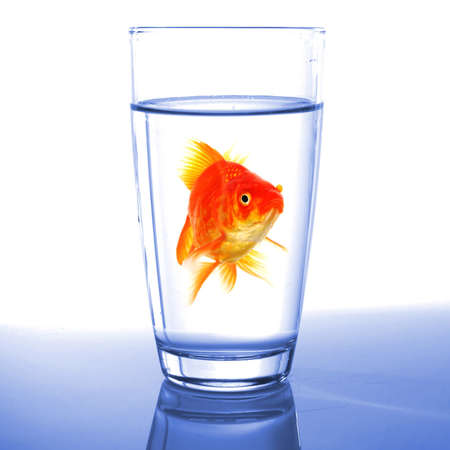 goldfish in drink glass showing jail prison free or freedom concept photo