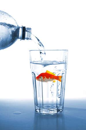 goldfish in water glass fishtank isolated on white background photo