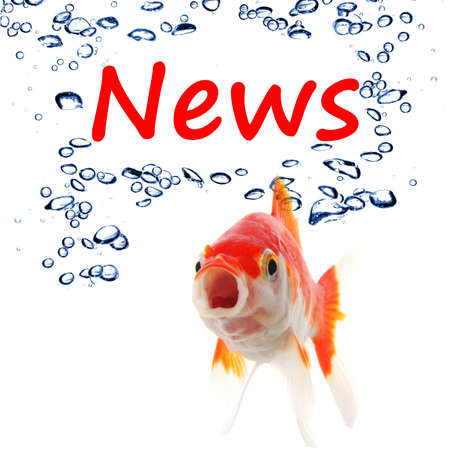 news or newsletter concept with word and goldfish on white background Stock Photo - 7932268