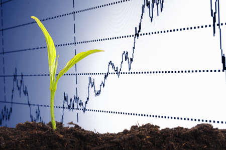 finance or business growth concept with young plant Stock Photo - 7974077