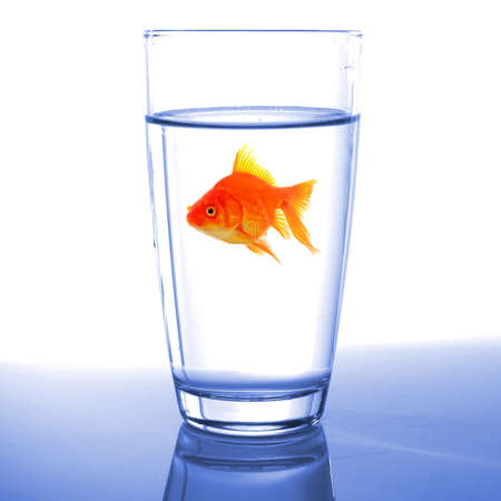 goldfish in drink glass showing jail prison free or freedom concept Stock Photo - 7974033