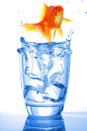 goldfish in water glass fishtank isolated on white background Stock Photo - 7974119