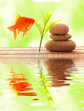 zen or spa concept with stones goldfish and water reflection photo