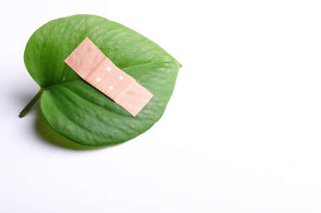 eco ecology ecological nature or environmental concept with green leaf and band aid on white Stock Photo - 7974079