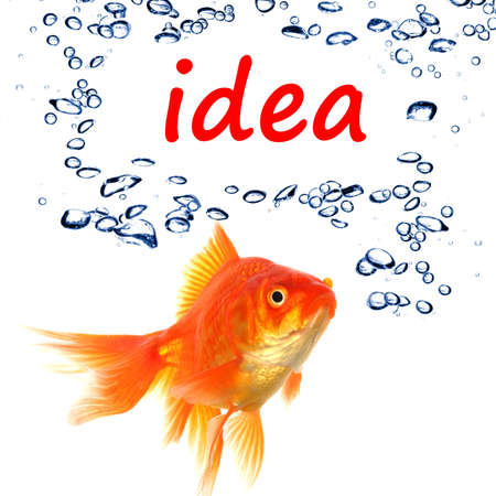 creativ: idea or creativity concept with goldfish and water bubbles on white